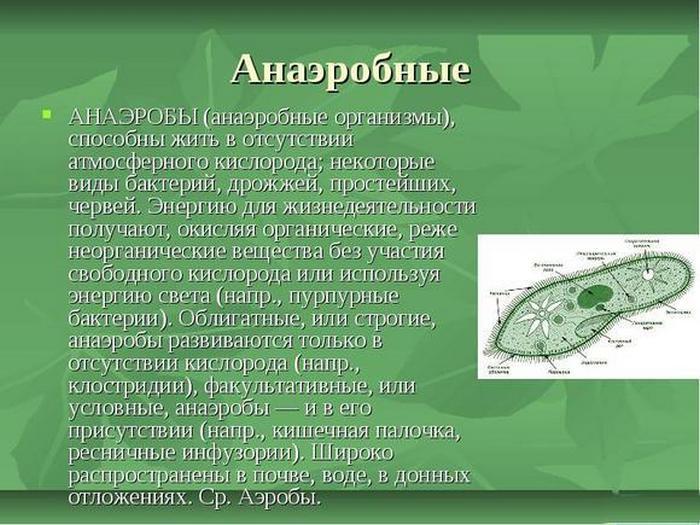 Что такое анаэробы