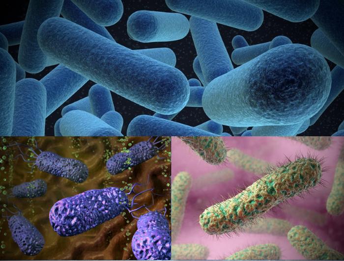 аэробные бактерии что это такое