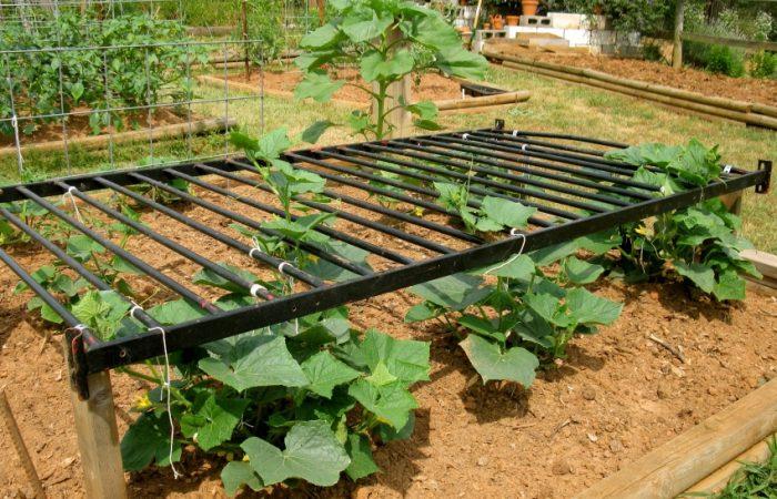 повышение урожайности огурцов