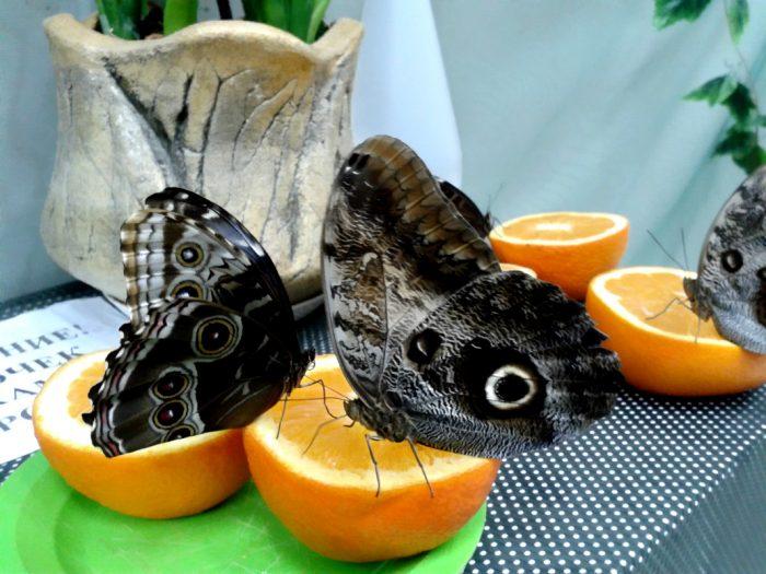 привлечение бабочек на огород