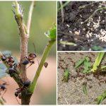 методы борьбы с муровьями