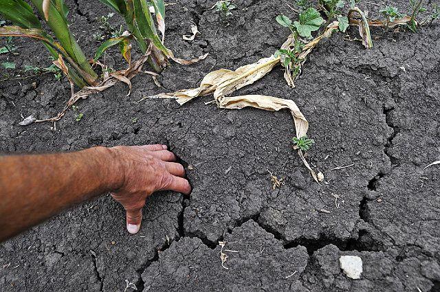 трескается почва после полива