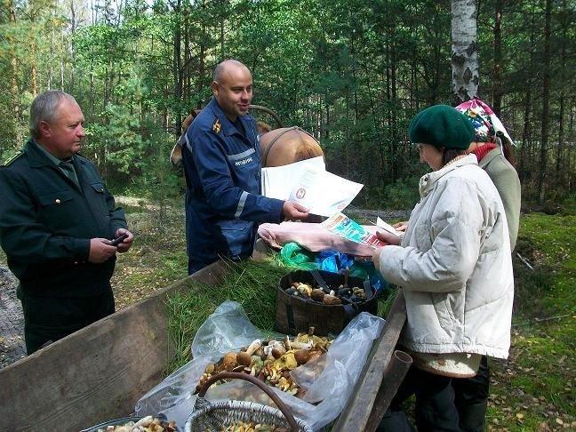 налог на грибы и ягоды