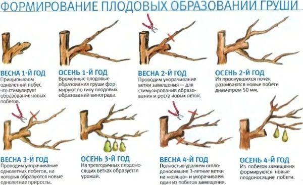 формирование груши