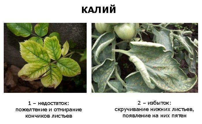 избыток и недостаток калия в растениях