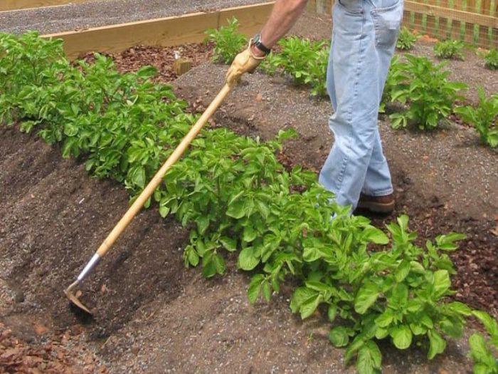 как окучивать растения