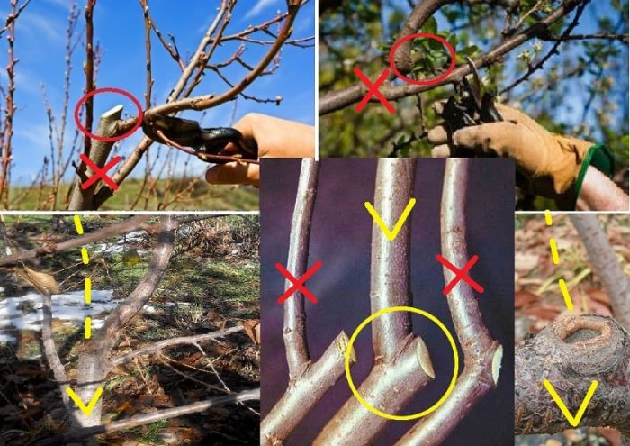 летняя обрезка деревьев