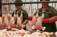 производители накачанных куриц