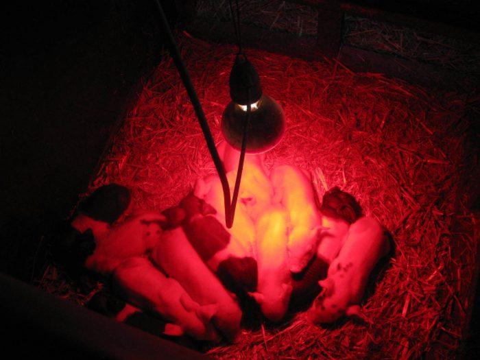 обогревающие лампы