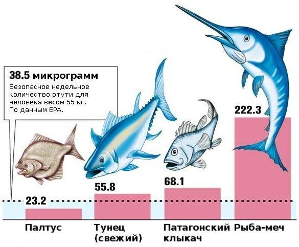 количество ртути в рыбе