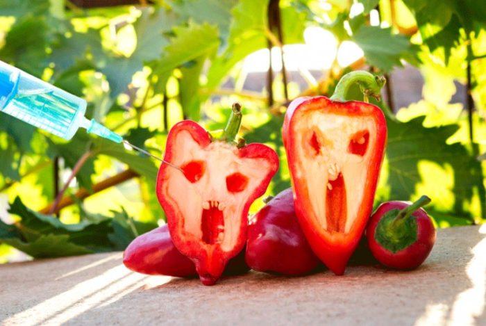 польза и вред продуктов с ГМО