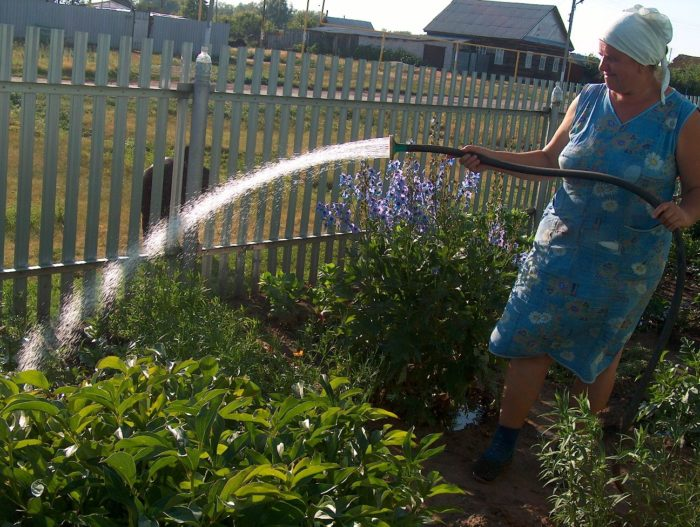 правила использования воды для садоводов