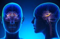 причина алкоголизма в мозге