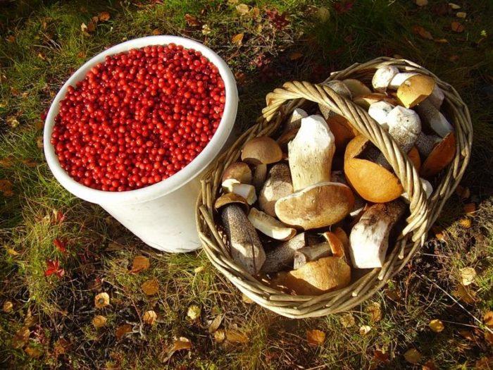 налог на сбор грибов и ягод