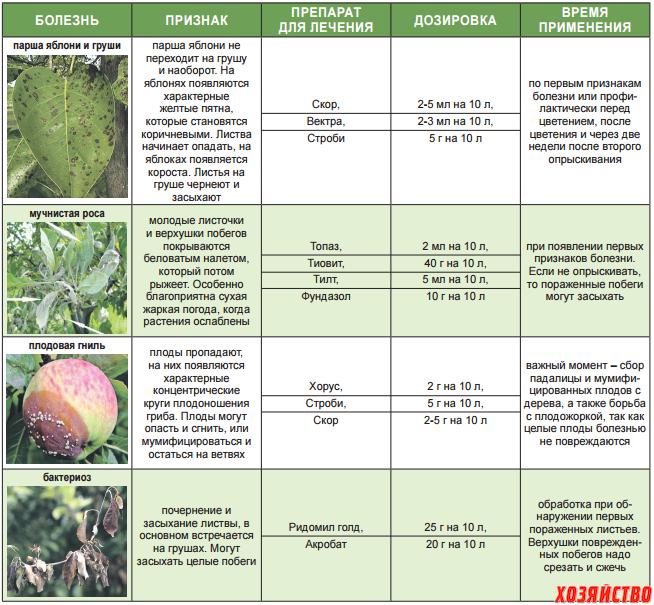 болезни яблок и методы защиты