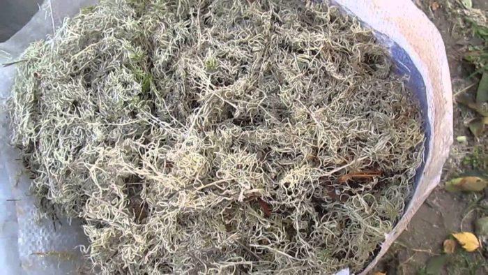 белый мох для сушки помещения