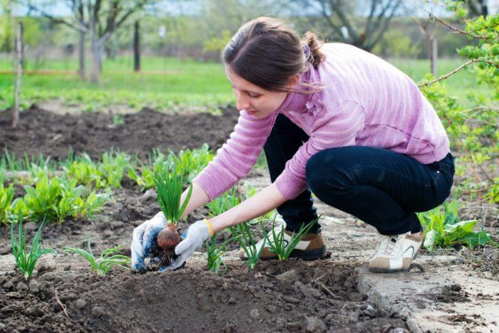 народные приметы садоводов