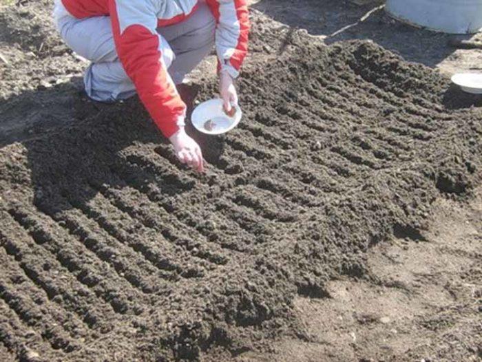 борозды для посадки морковки
