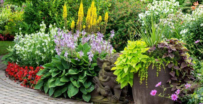 Неприхотливые многолетники для сада