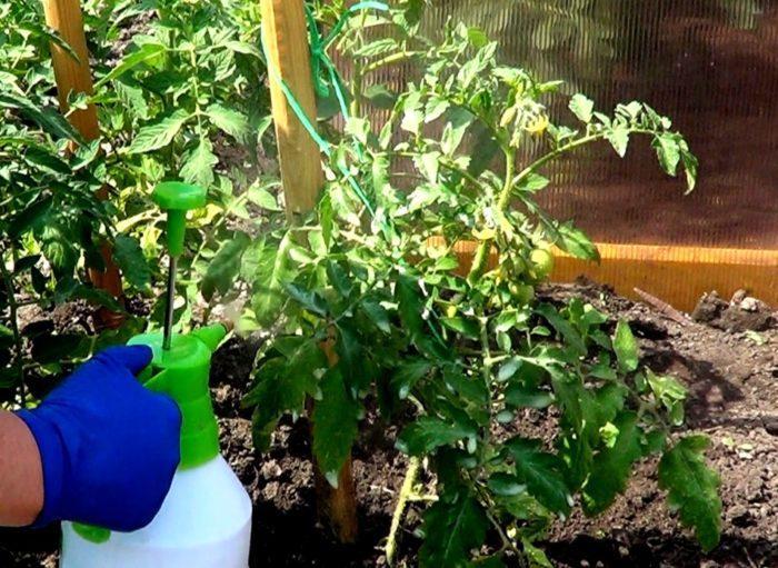 удобрение томатов методом распыления