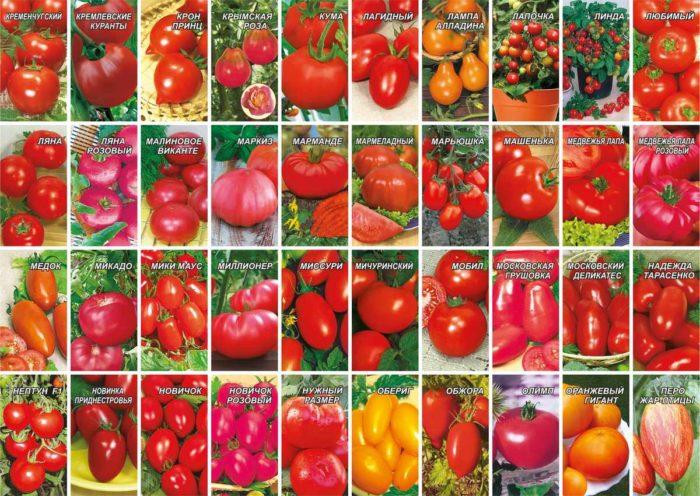 список сортов помидор