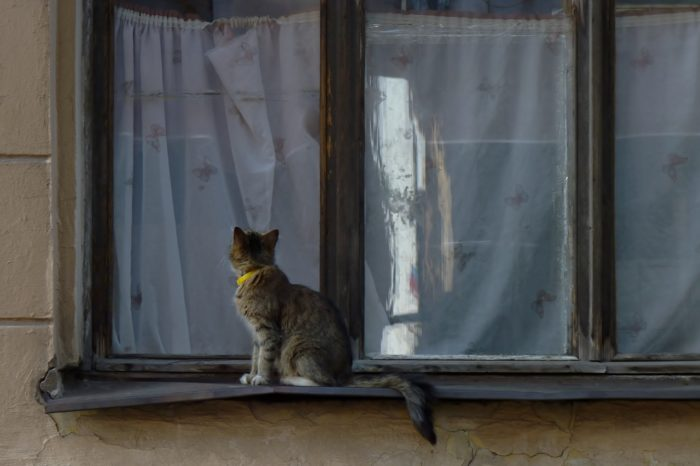 грязные окна и занавески