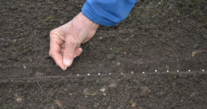 глубина посадки моркови