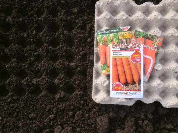 высадка морковки