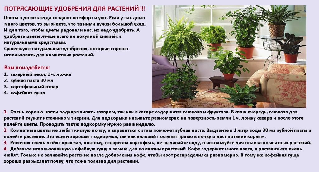 подкормка комнатных растений