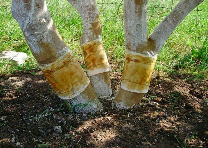 защита дерева от муравьев