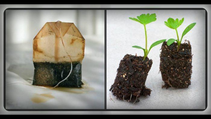 чайные пакеты как удобрение для растений