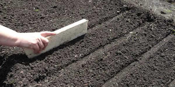 трамбуют почву доской