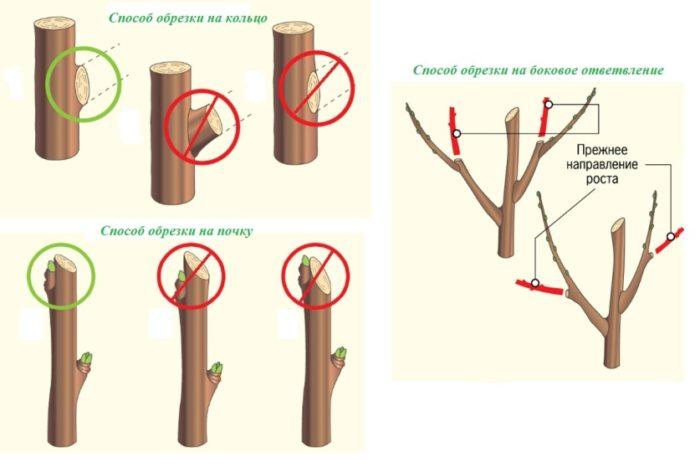 способы обрезки фруктовых деревьев