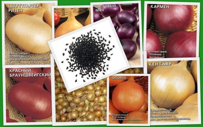качественные семена лука
