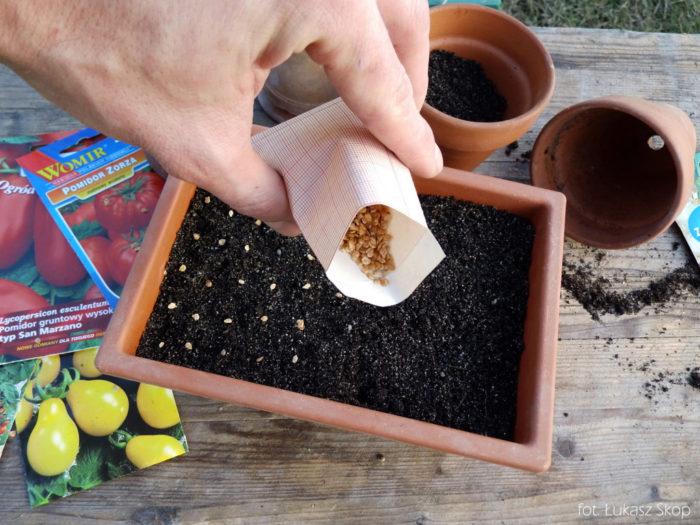 высаживание семян томатов