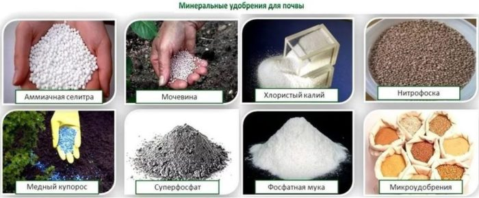 минеральные удобрения для лилий