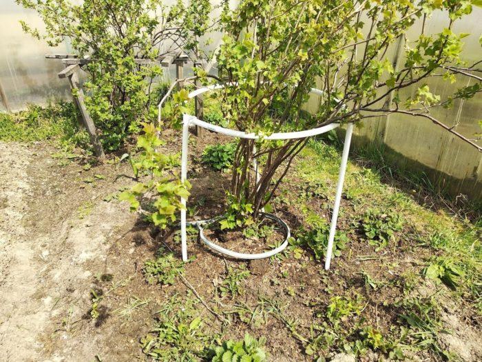 Подпорки для плодовых кустарников из пластиковых труб