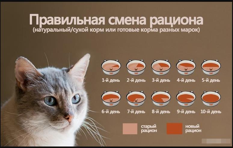 как менять рацион питания кошки