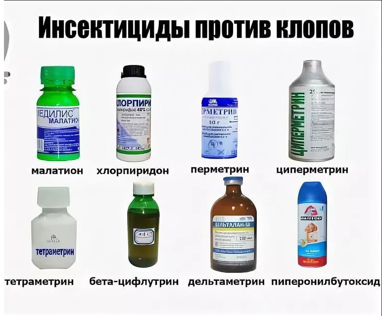 применение инсектицидов против клопов