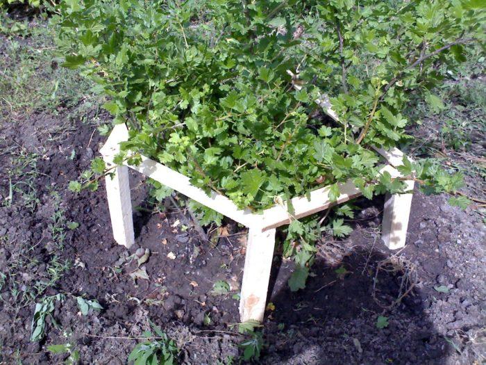 Каркас из деревянных реек для плодовых кустарников