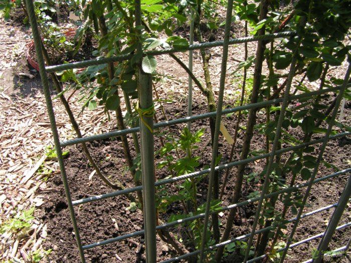 Подпорки из арматуры для плодовых кустарников
