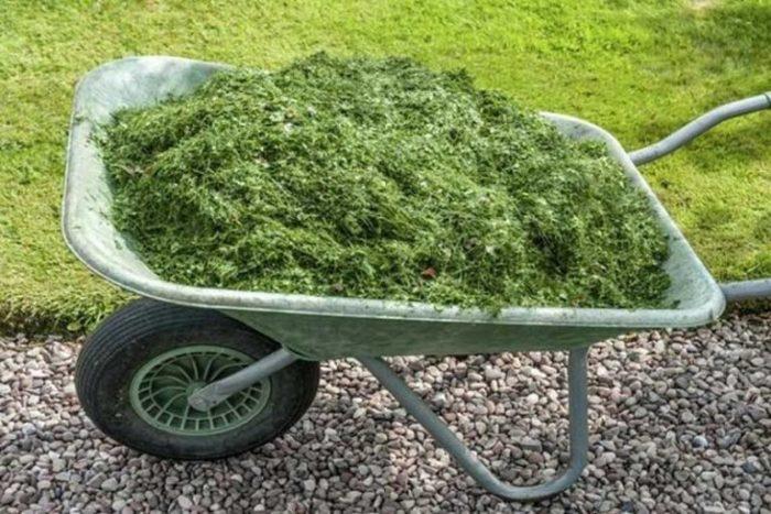 мульчирование сырой травой