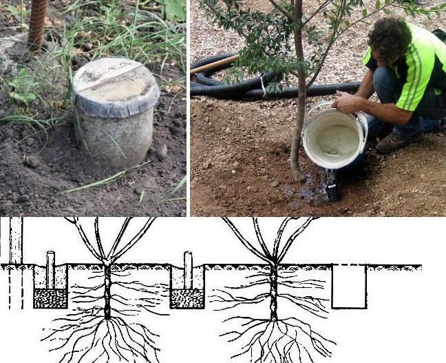 вариант полива вишневого дерева