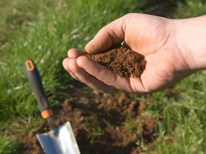 почему сухая почва