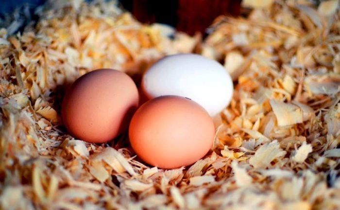 хранение яиц с опилками