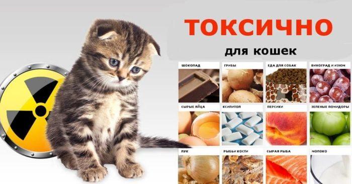 что токсично для кошек