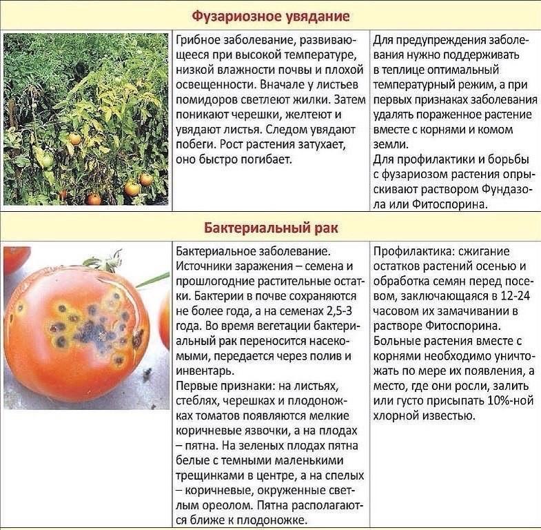 частые болезни помидоров