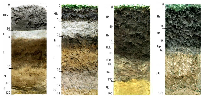 разновидности почвы