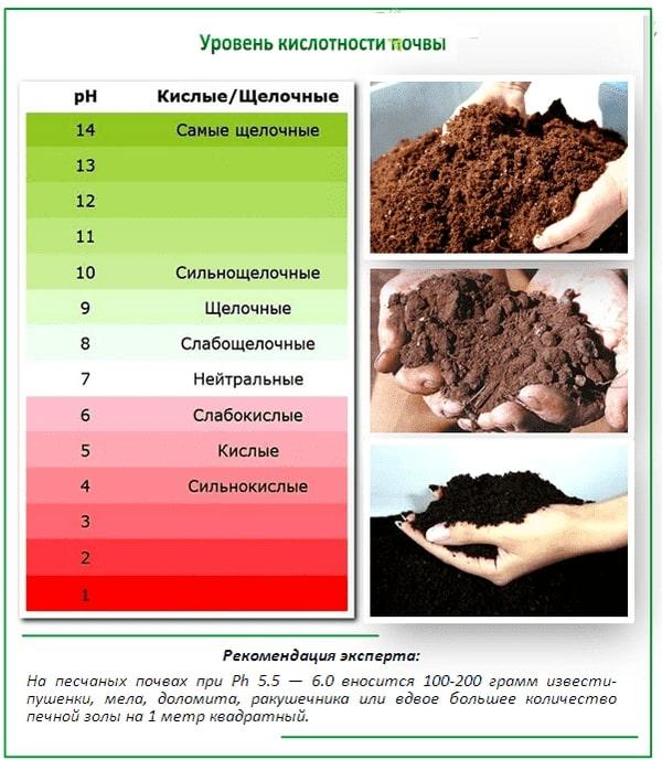 кислотность почвы