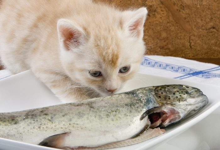 мясо рыбы для кошки
